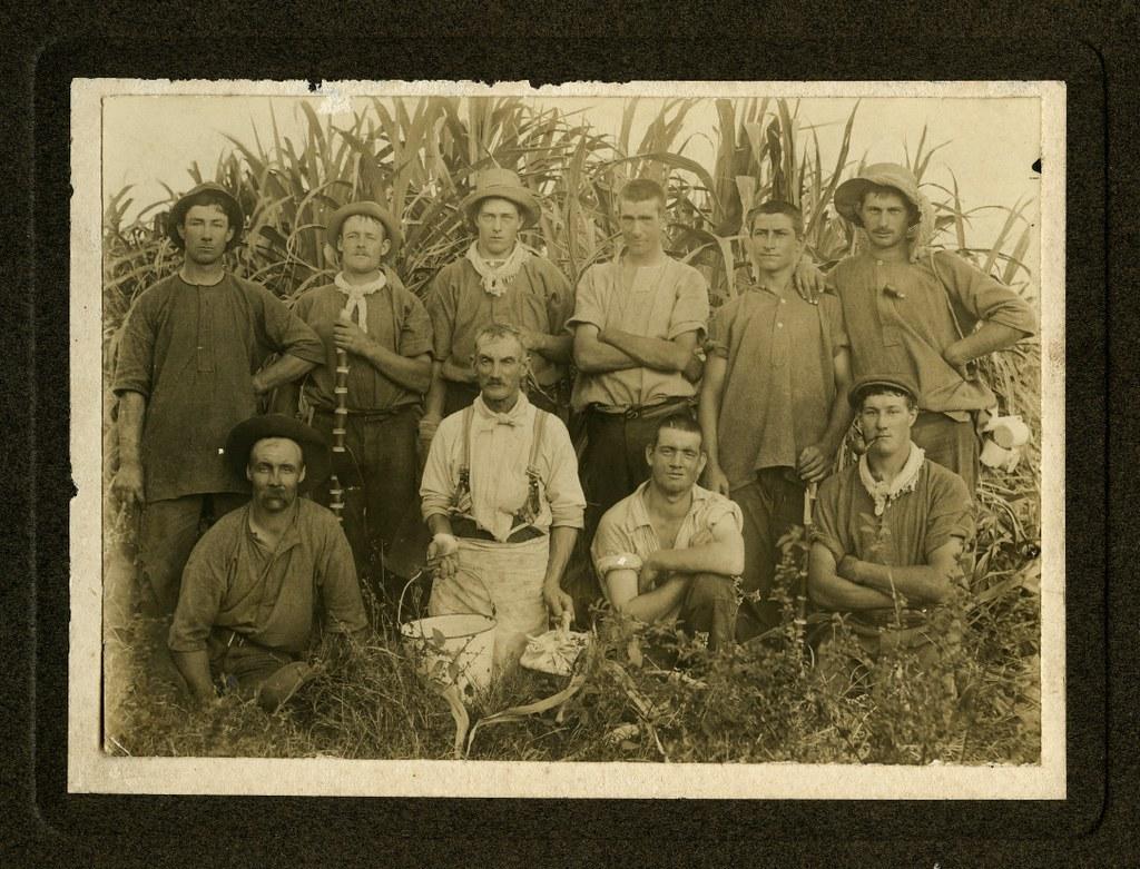 Sugar cane cutters