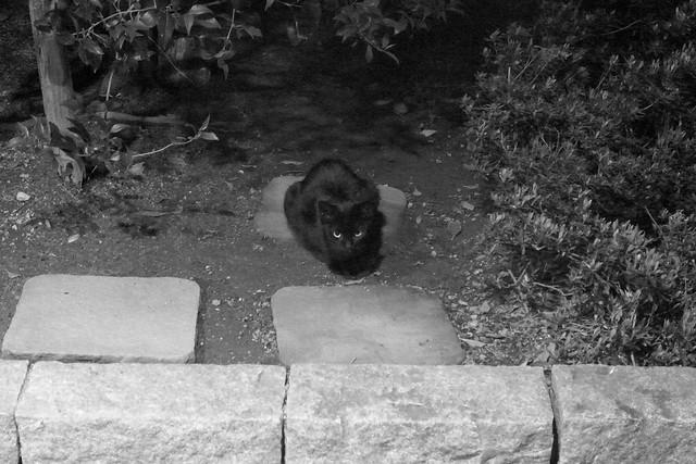 Today's Cat@2011-05-01