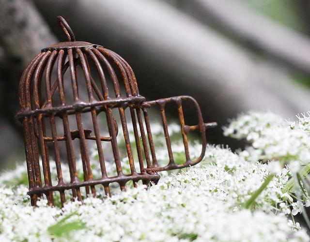 miniature birdcage