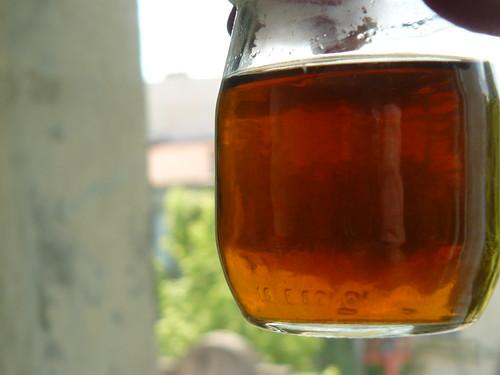 ribwort plantain / plantain lancéolé / plantago lanceolata - dyebath