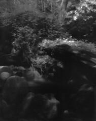 05-01-11-IR2 (Drew Saunders) Tags: blackandwhite bw film infrared 4x5 ebony aura largeformat efke ir820 ir820aura
