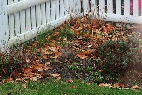 our garden visitor