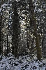 DSC_2979 (Mauigirl 2011) Tags: pink trees white snow cold tree green dogs smile hat fun washington pups nikon cows leo freeze snowball bubba february fabulous capture beanie carhartt 011 d90 nikoncapture fabulousday nikond90