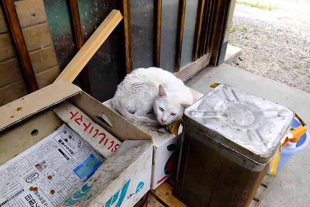 Today's Cat@2011-05-22