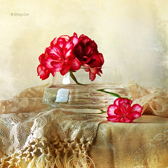 Still Life  & Geranium Flowers (MargoLuc) Tags: flowers stilllife texture geranium pelargonia crystalvase platinumheartaward magicunicornverybest magicunicornmasterpiece stillexcellence sbfmasterpiece sbfgrandmaster