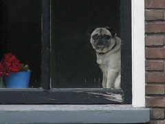How much is that doggy in the window? (Restit (Very busy but I wont forget you)) Tags: blauw hond rood raam verf steen muur bloem bloempot kozijn dimex