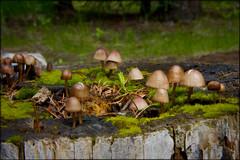 Mushrooms (Mark Pouley) Tags: nature landscape mushrooms outdoors washington lakes resort logcabin twinlakes rainbowbeach northtwin southtwin inchelium colvillereservation