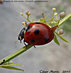 NATURALEZA EN Oiartzun - GIPUZKOA. C.M. (Cesalf) Tags: naturaleza