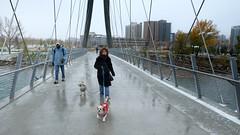 Dog Walk (Sherlock77 (James)) Tags: calgary downtown georgeckingbridge streetphotography people man woman dog
