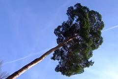 tree lines (marfis75) Tags: park blue sky green plane germany deutschland wiesbaden fuji hessen linie air natur himmel cc f30 finepix grn blau wi garten baum perspektive freudenberg ccbysa schlossfreudenberg marfis75 landeshaupstadt marfis75onflickr