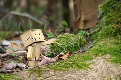 in the forest ( yoshi.myu) Tags: japan amazon box danbo revoltech danboard
