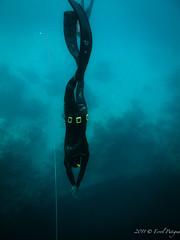 P1020836 (eputigna) Tags: ocean blue beach water mar fishing florida hunting palm atlantic freediving fl breathe pesca hold apnea spear spearfishing ocano speargun submarina subaquea