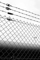 Stacheldraht (l'inconnu du placard) Tags: fence blackwhite barbedwire zaun laterne latern stacheldraht maschendraht schwarzweis leicam8 elmarit28mmasph