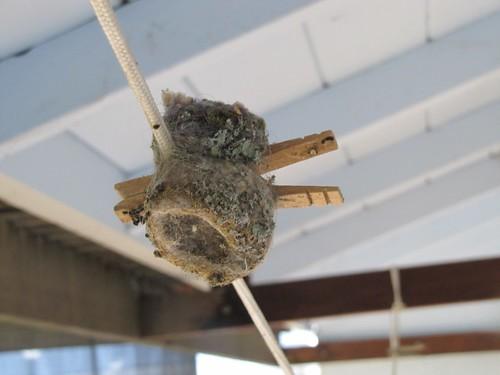 1double hum nest carol edson livermore