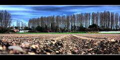A ras de suelo. (druida601) Tags: arboles cielo suelo tierra canon450d druida601
