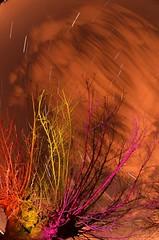 (garu-garu) Tags: torino star samyang8mmf35fisheye rural organic noflash nikond7000 nature lungaesposizione luci longexposure lightpollution lightpaint paint light led fisheye country