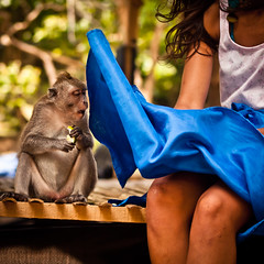 The monkey who saw too much (Part 2/4), Pura Luhur Uluwatu - Bali (adde adesokan) Tags: street travel blue bali color apple girl pen hair indonesia temple photography monkey day streetphotography olympus skirt peeking indonesien ep1 ep2 streetphotographer m43 mft mirrorless microfourthirds theblackstar mirrorlesscamera streettogs