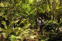 tasmania 2011 - b1 mount barrow ae (liam.jon_d) Tags: rain forest landscape rainforest mt walk tiger country australia mount pete tasmania 100 walkers barrow shannan billdoyle