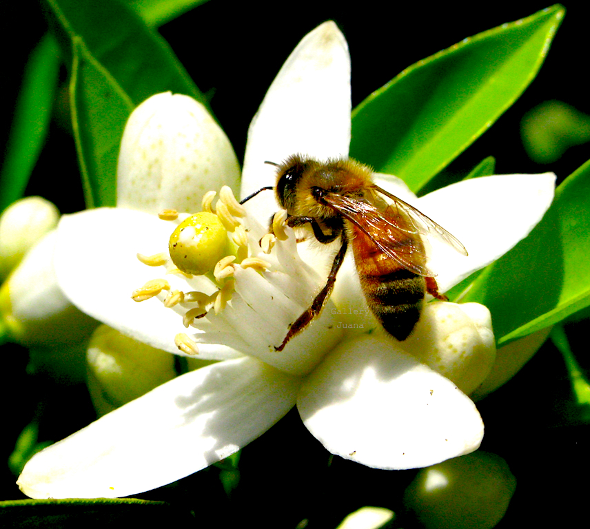 Bee II April 2011