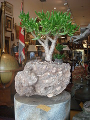 "Bonsai • <a style=""font-size:0.8em;"" href=""http://www.flickr.com/photos/51721355@N02/5638653379/"" target=""_blank"">View on Flickr</a>"