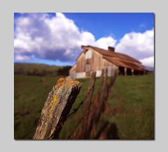 Tipping Fence Friday (RZ68) Tags: old roof film field clouds barn fence cow moss spring wire focus san post bokeh jose rusty velvia pasture fields lichen friday barbed provia tipping selective e100 rz68