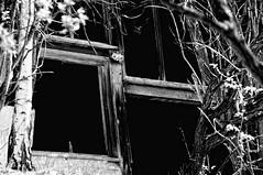 Black windows (sollyth) Tags: blackandwhite bw window monochrome blackwhite nikon poland polska krakow monochromatic crakow kraków cracow cracovia krakau okno d300 oldwindow czarnobiałe krakoff monochromia monochromatyczny nikkorafsdx18200f3556gifedvr stareokno