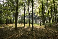 Burial Mound (Nick J Stone) Tags: wood woods poem bronzeage burialmound cameronself wittonwoods bactonwoods bactonwood 201104240021 istoleacoupleoflines