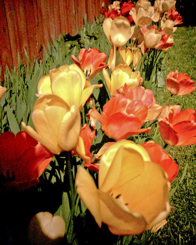 Retro Digital Tulips