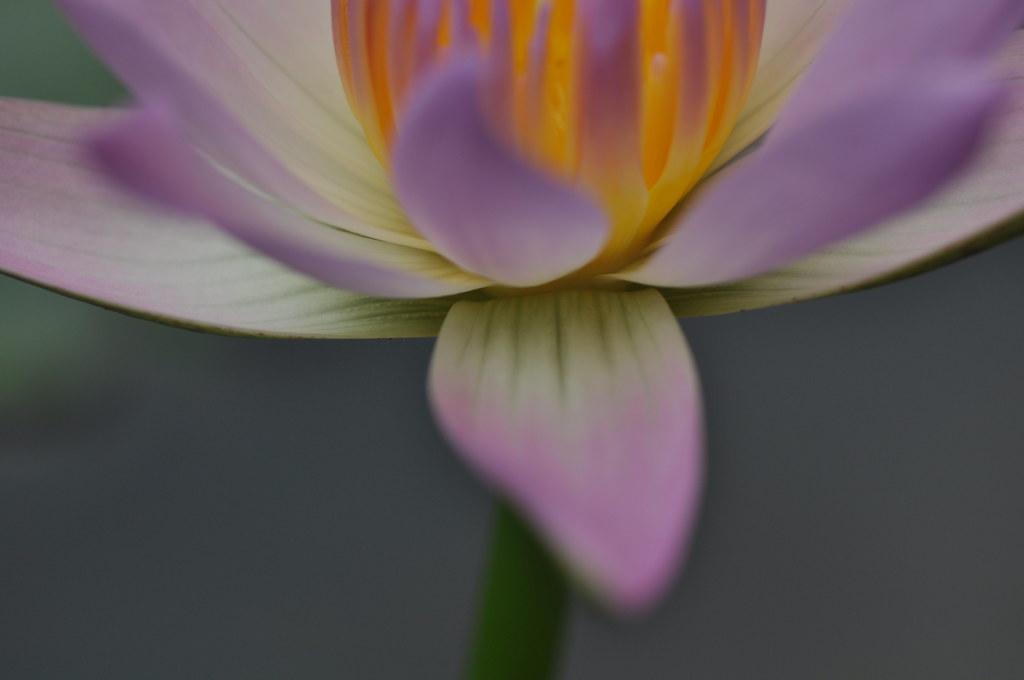 Lotus time 星期天去打荷 ...