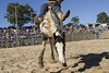 Dayboro Rodeo (farflungphotos) Tags: horse cowboy rodeo dayboro brisbanemeetup