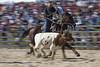 Dayboro Rodeo (farflungphotos) Tags: horse cowboy rodeo calf dayboro brisbanemeetup