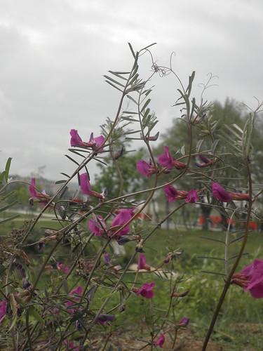 flores no Parque em dia da(s) Mãe(s)