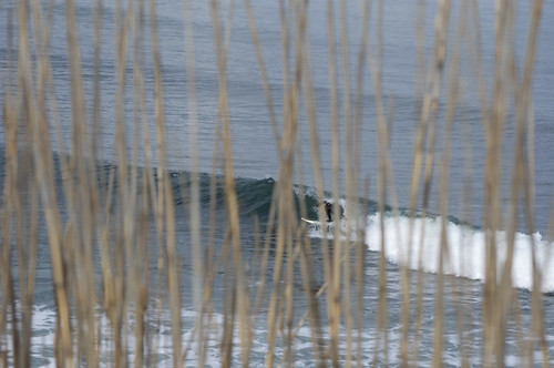 josh. coverup thru the reeds