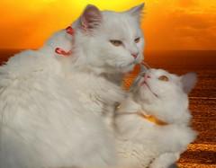 Meggie and Pufi - romantic moment :) ( Eleonora Eli ) Tags: topshots natureselegantshots lovelyflickr aboveandbeyondlevel1 aboveandbeyondlevel2
