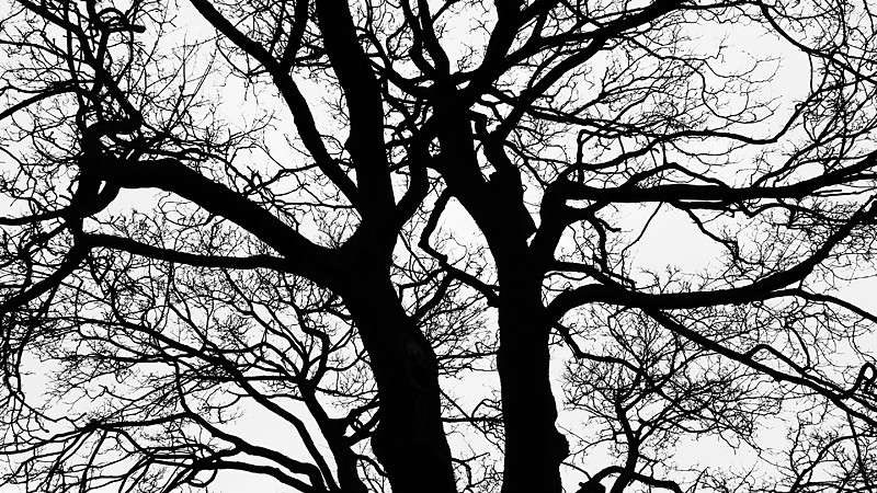 Tree Abstract 1