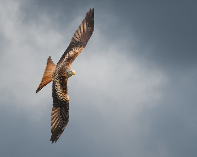 EXPLORED !!! Red Kite Banking