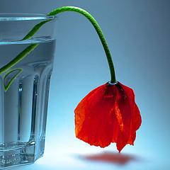 Remains of a better past (Vlado V) Tags: stilllife flower glass 50mm olympus adapter manual om zuiko e510 rhs1