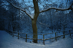 which way (garth wyles) Tags: snow nighttime brrr snowylandscape snowscenes blueblue coldcoldcold winterwarmers coldnight decembersnow snowyworld whichwaynow snowatnight dontgetlost coldblue changeofdirection eveningaftersnow nightintrigue abluebluechristmas seperatepaths fencebothways