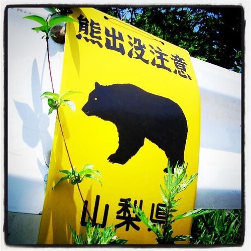 クマがでます。