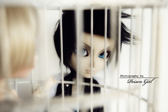 Boys of Summer - Too Hot For Words (-Poison Girl-) Tags: new blue summer jared black birdcage boys girl hair fur eyes sebastian audrey wig groove pullip poison pullips boysofsummer poisongirl eyechips junplanning taeyang rewigged stica taeyangs rechipped