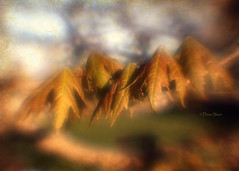 Autumn Brilliance Maple.. (DigiDi) Tags: usa texture nature leaves lensbaby spring ne lincoln softfocus dreamy digidi naturalexcellence myowntexture saariysqualitypictures plasticoptic autumnbrilliancemaple