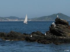 between (Claudia Telles) Tags: blue sea sky seagulls azul boat mar barco gaivotas cu