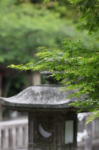 新緑、灯ろう / Season of the fresh green