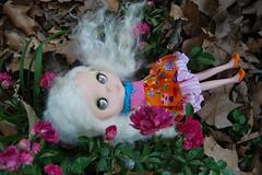 Jinx & the climbing roses