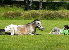 Chief Joseph (Bruce Lee) and Rosie (jkeenan501) Tags: horse girl field oregon appaloosa pony laying girlandherhorse