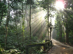 Have you ever wandered lonely through the woods? (Raiyan Kamal) Tags: morning bridge light sun tree forest trek woods ray path walk hike trail vegetation bangladesh myst lawachhora shreemongol