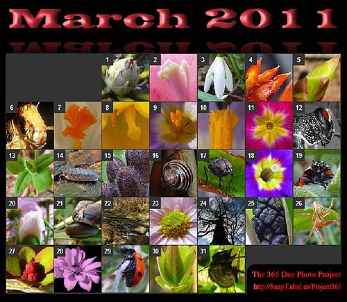 monthly calendar march. Monthly Calendar ? March 2011