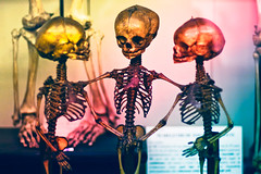 Friendship never ends (_Mg_pix) Tags: friends love skulls skeleton peace friendship forever afterdeath shakehands
