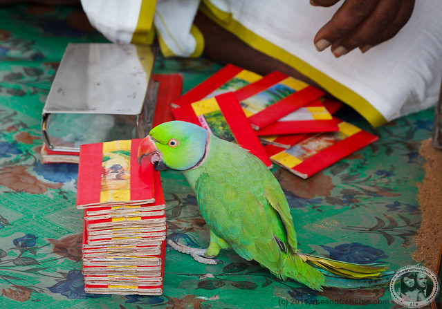 Parrot Brings Good Fortune