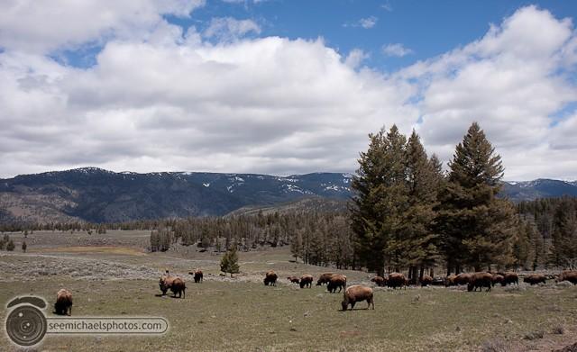 Yellowstone Day 1 52611 © Michael Klayman-031